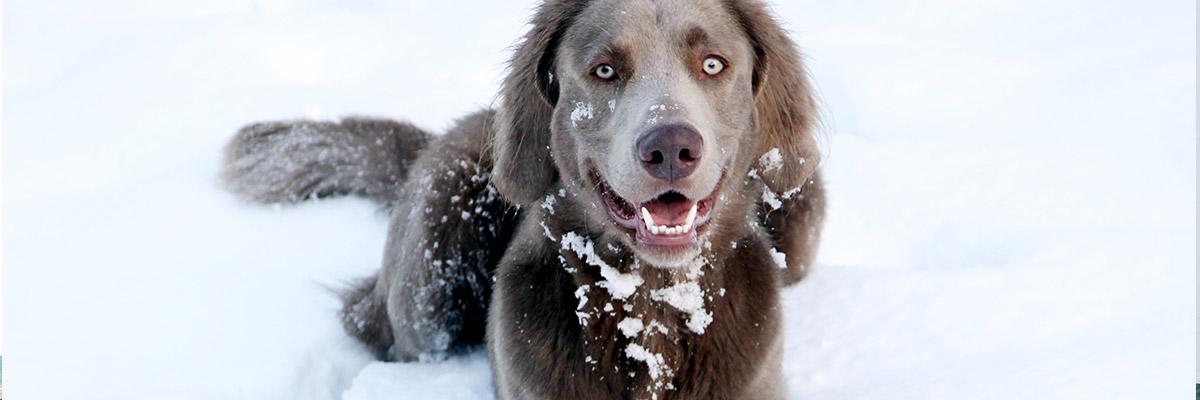 Mister Doggy - Produktbild